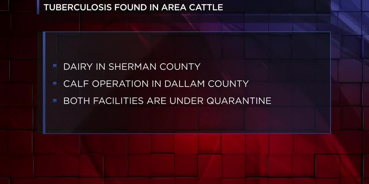 Texas health officials confirm cattle tuberculosis in area dairy, calf-raising operation
