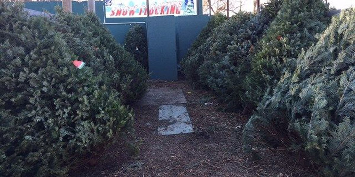 Boy Scouts offering free Christmas trees
