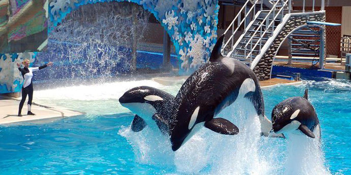 SeaWorld suspenderá show de orcas en San Diego