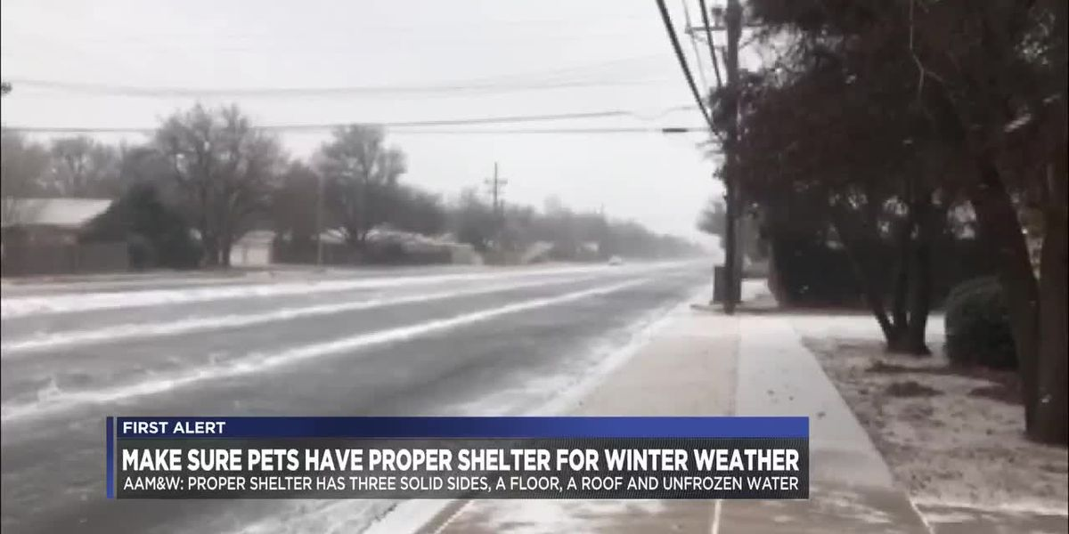 VIDEO: Pet owners reminded to make sure pets have proper shelter for winter weather