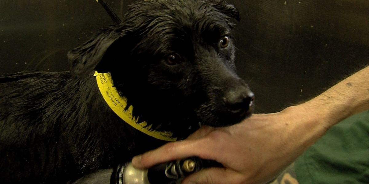 Local groomers give shelter pets a makeover