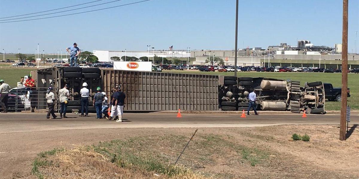 4 cows dead in semi truck rollover