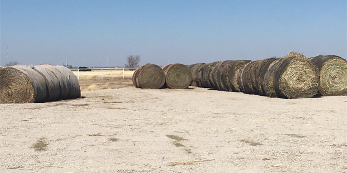 Local industries begin to feel the Panhandle's drought ahead of crop season
