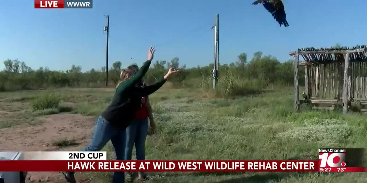 INTERVIEW: A hawk is released on National Wildlife Day at WWWR