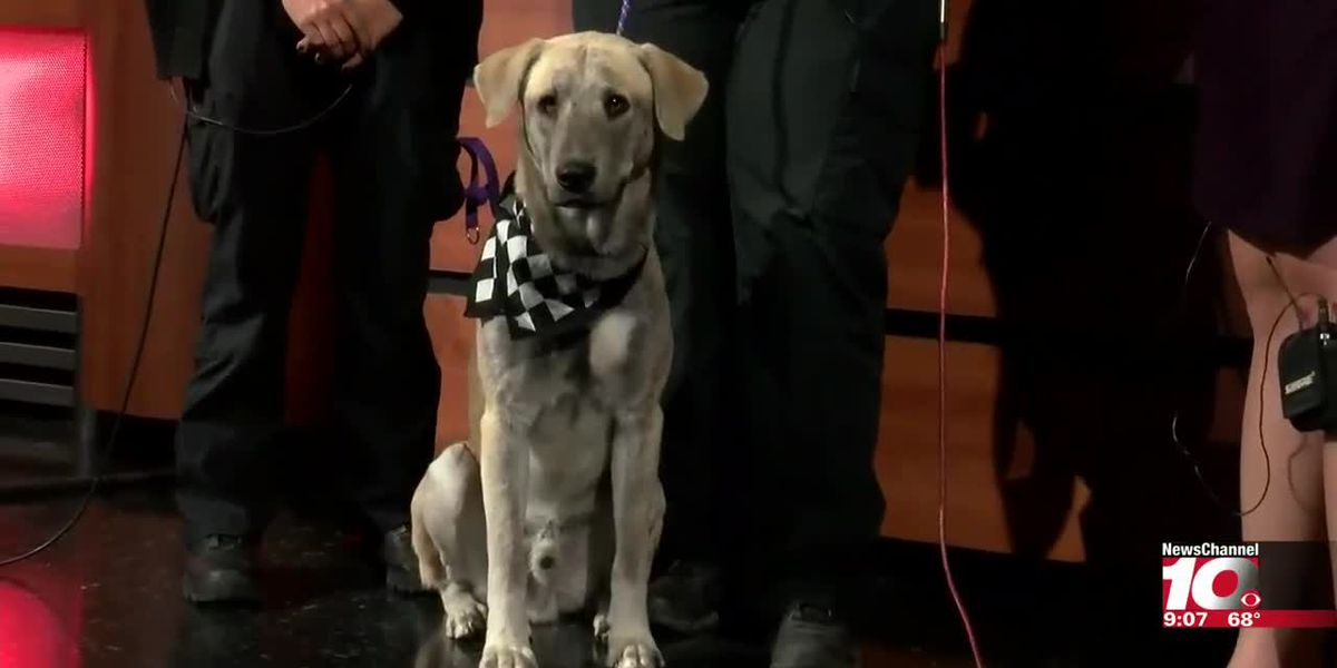 INTERVIEW - Cassidy and Leighann brought a furry friend who is for Adoption Thursday