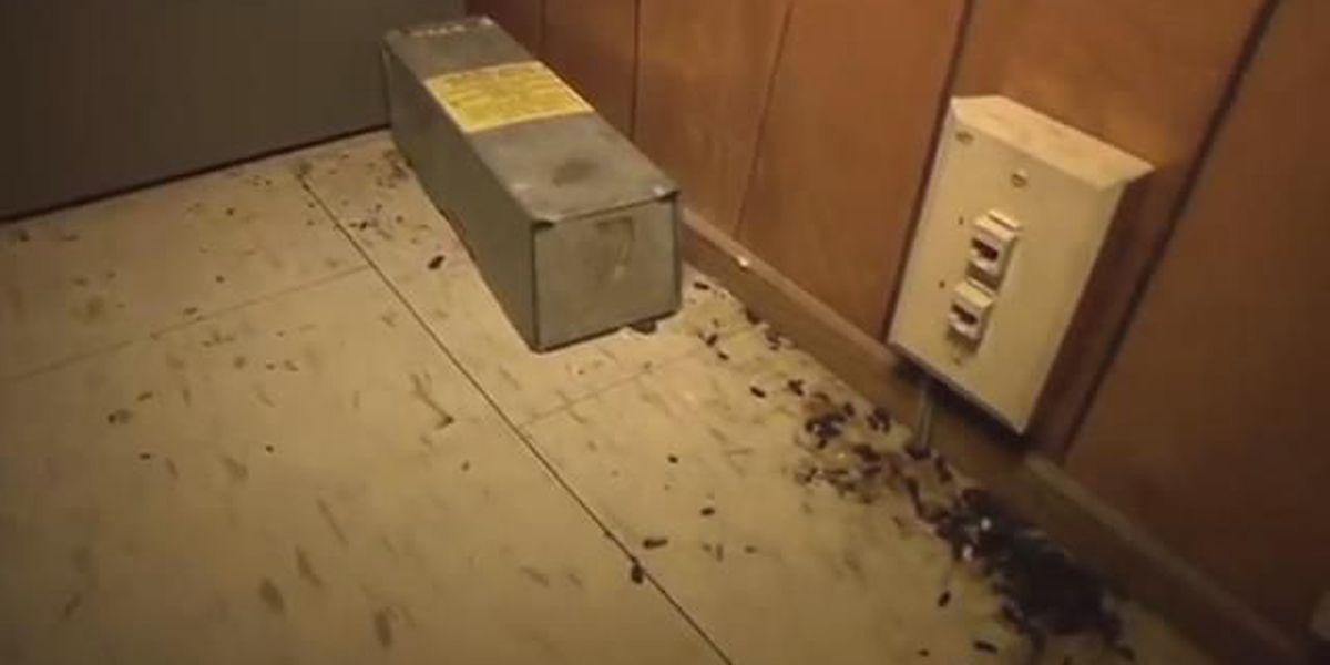 First Texas case of hantavirus seen in the panhandle
