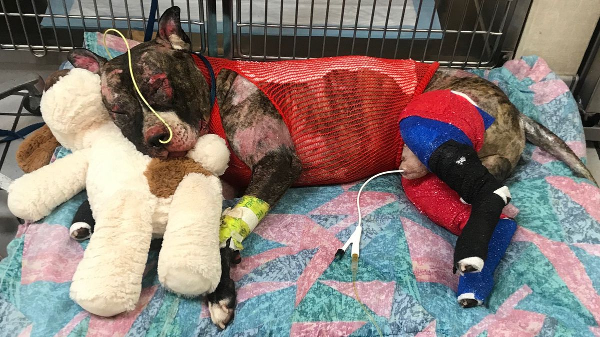 Community Rallies After Beloved Tommie The Dog Tied To