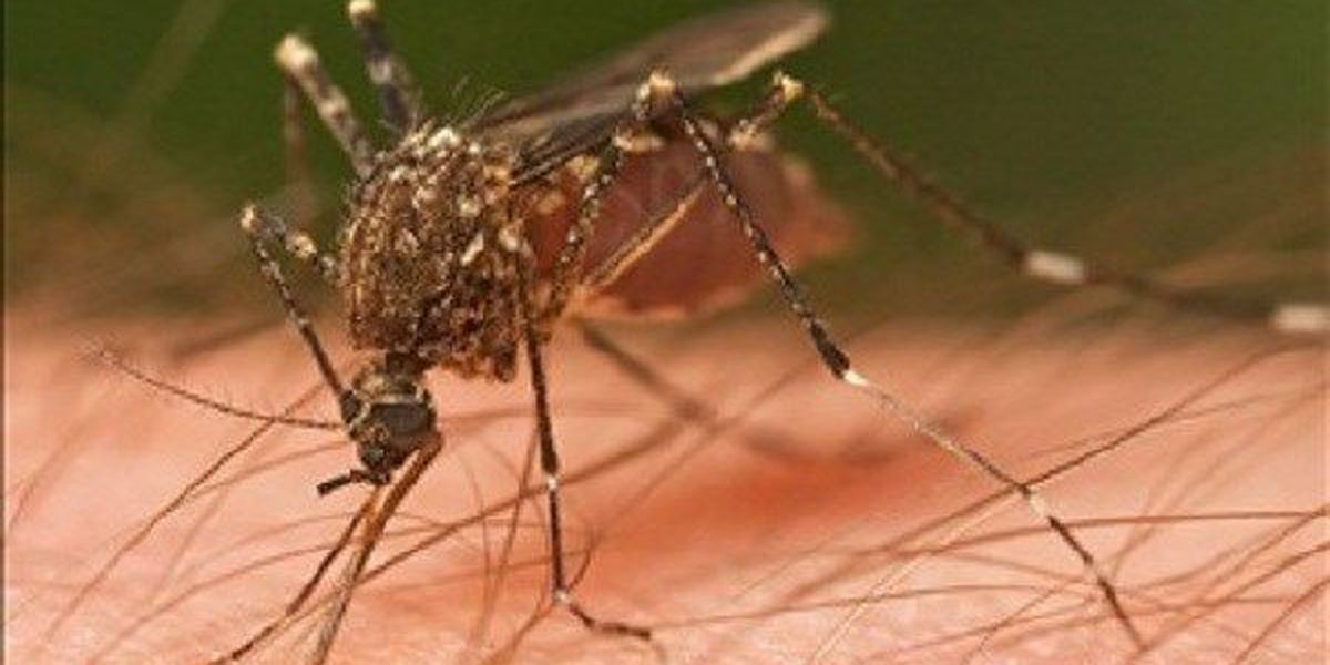 Officials report first West Nile virus case in Lubbock County