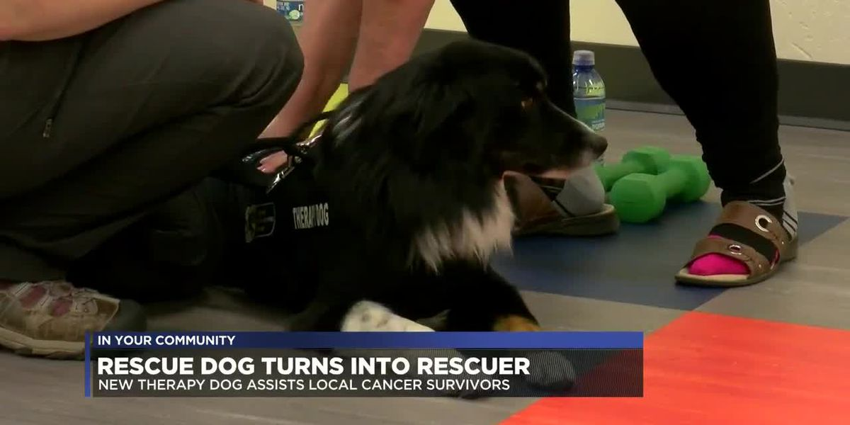 Rescue dog becomes rescuer for cancer survivors