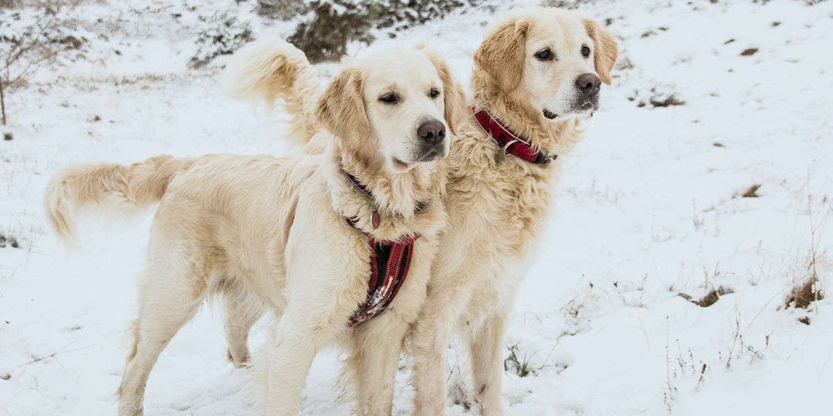 Amarillo sees rise in calls for pets left out in cold weather conditions