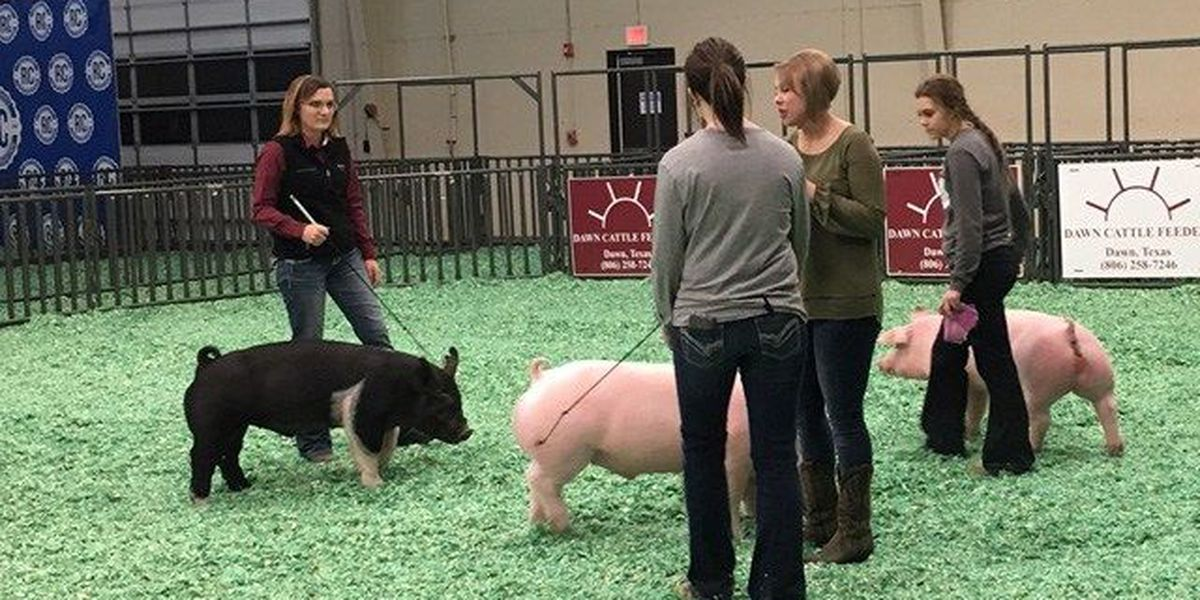 Area youth prepare all year for the Randall Co. Jr. Livestock Show