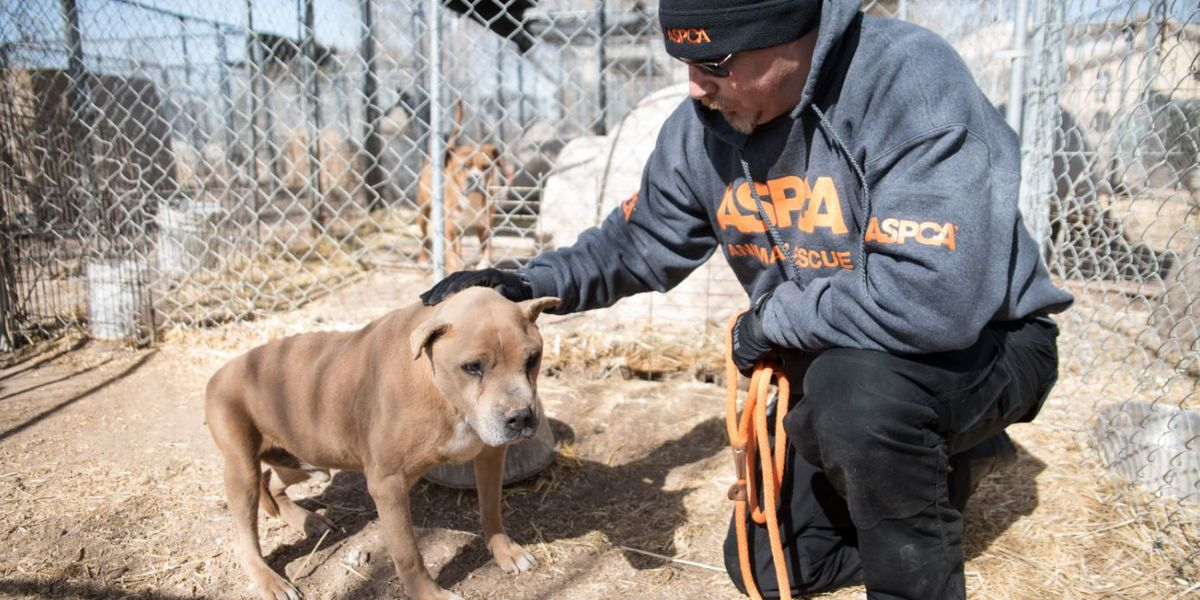 Sanctuary seizure: more than 100 animals rescued in potential animal abuse case