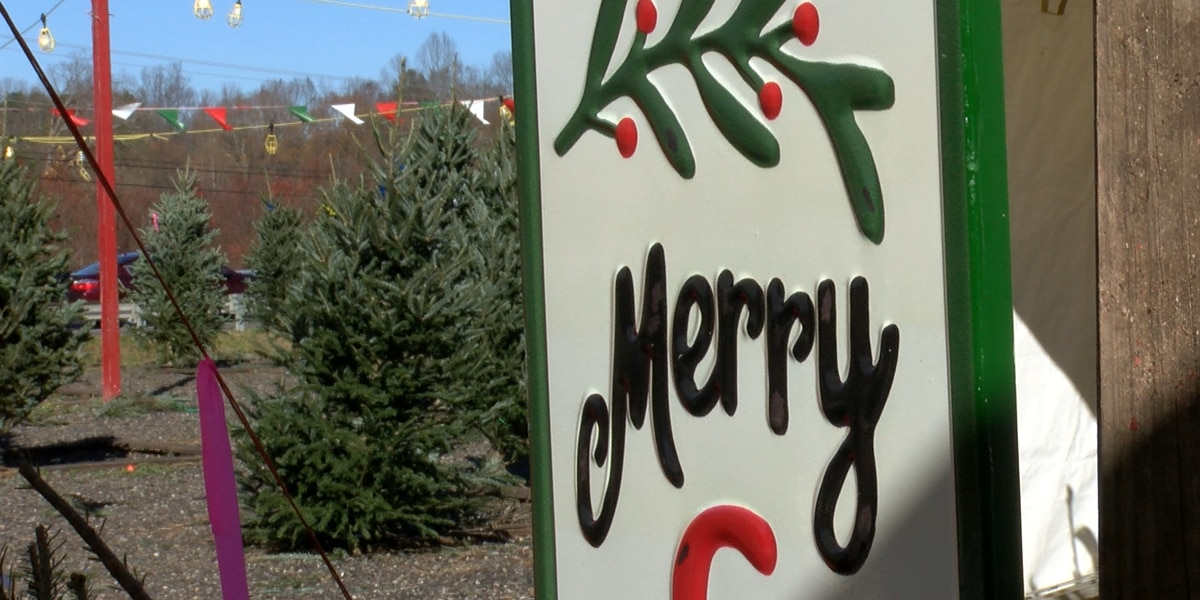 'The beauty of their faces when they see something like that:' Christmas tree drive for the homeless