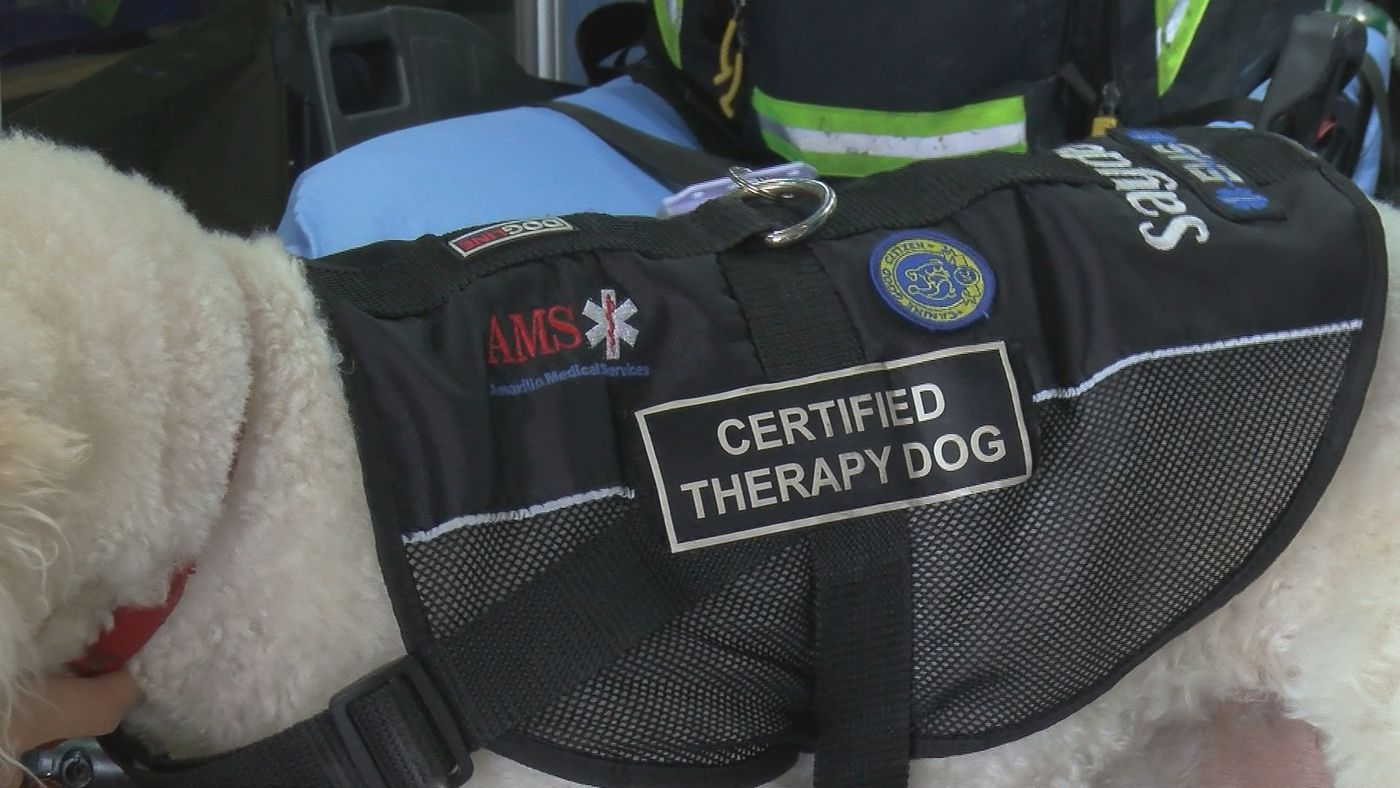 Amarillo therapy dogs helping those working Hurricane ...