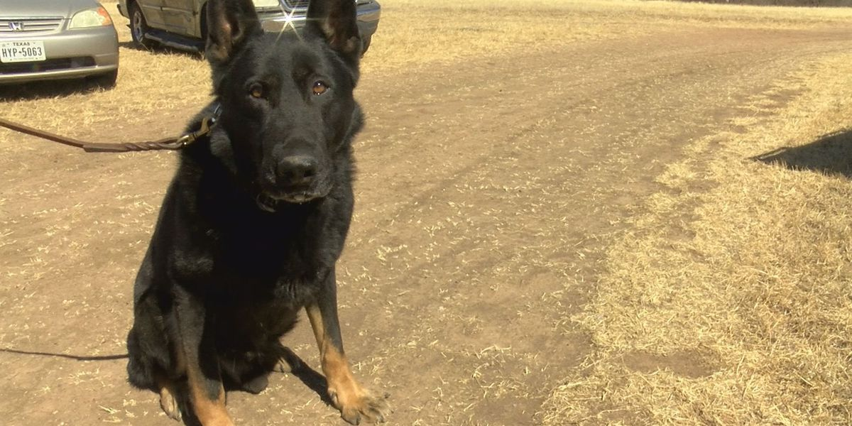 Hall County K-9 officer needs your vote to receive national honor