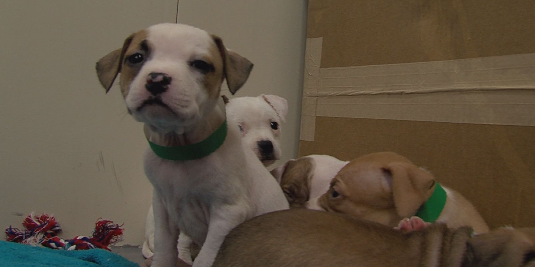 Experts concerned about increase of positive heartworm tests in Amarillo