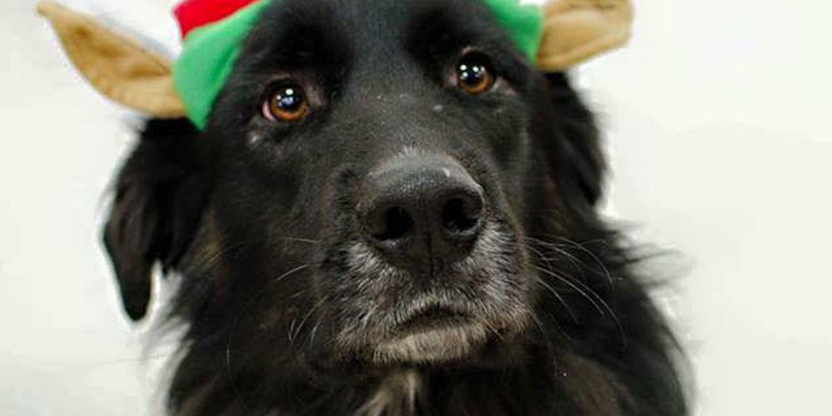 Panhandle Paws of Hope holding holiday pet photo fundraiser