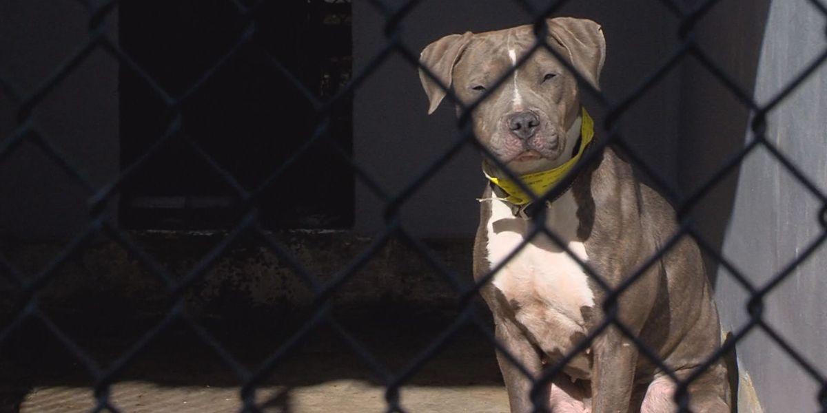 Texas cracks down on animal cruelty offenders