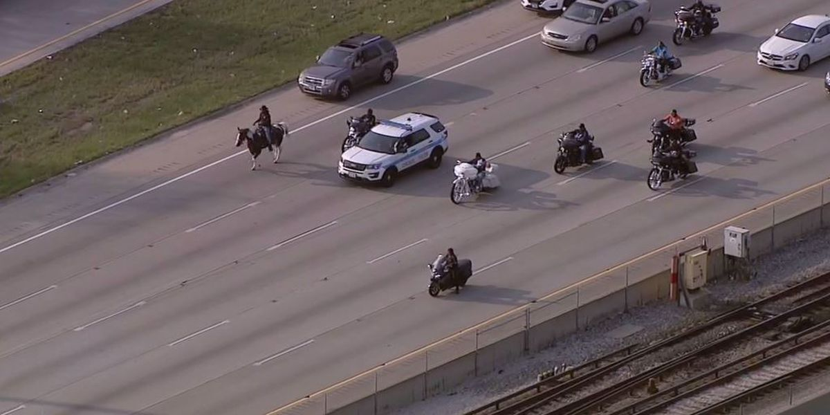 Activist cowboy arrested after riding horse down Chicago highway