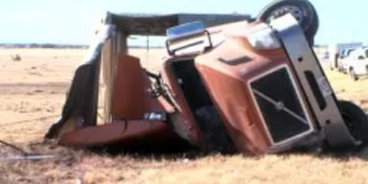 Semi carrying cattle overturns east of Amarillo, driver ejected
