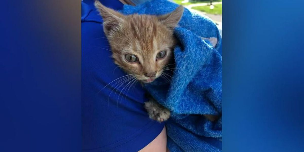 Firefighters rescue kitten trapped for 6 hours under car hood