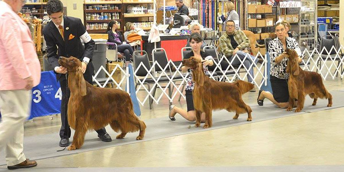 Panhandle Kennel Club dog show taking place this weekend