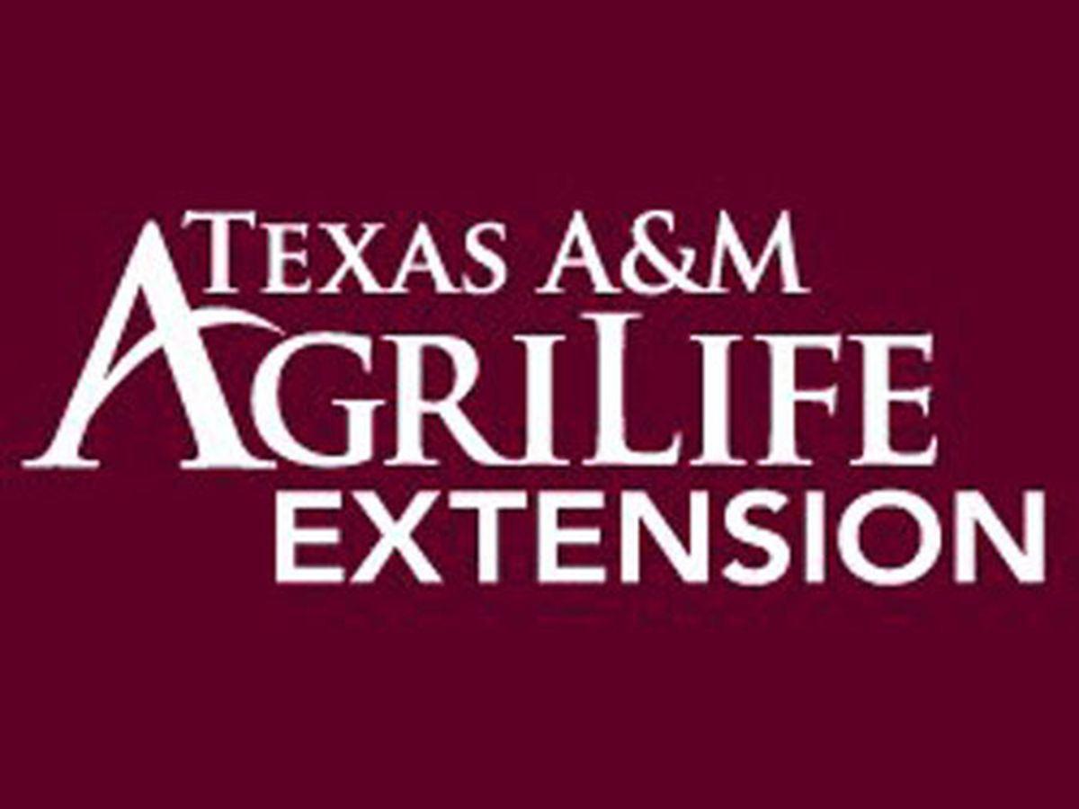 30 volunteer leaders for Texas A&M AgriLife Extension 4-H program honored
