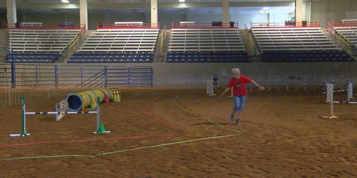 AOTC Dog Agility Trials: Dogs and owners bond when put to the ultimate test