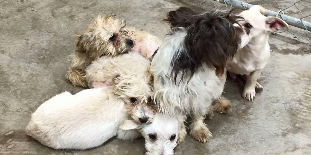 Sunray animal shelter battles animal abandonment
