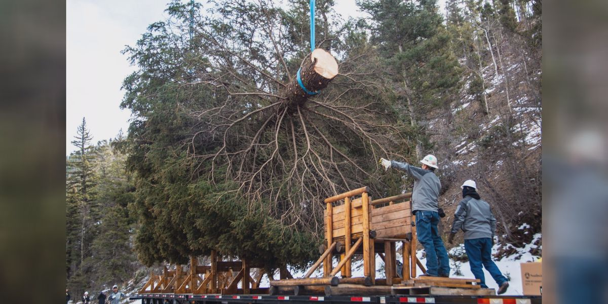 Red River's Capitol Christmas Tree becomes social media sensation in Panhandle-region