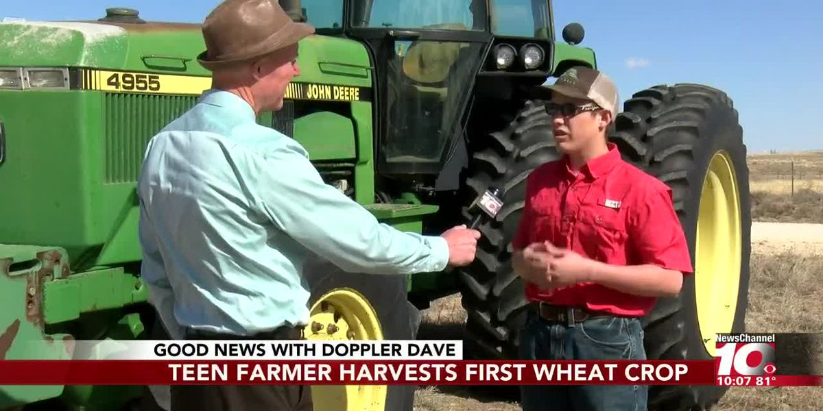 GOOD NEWS: Teen farmer harvests first wheat crop