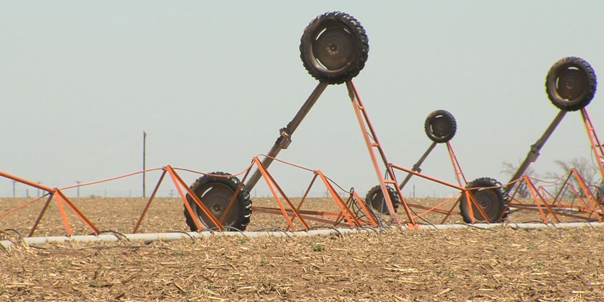 Castro County farmers assess storm damage
