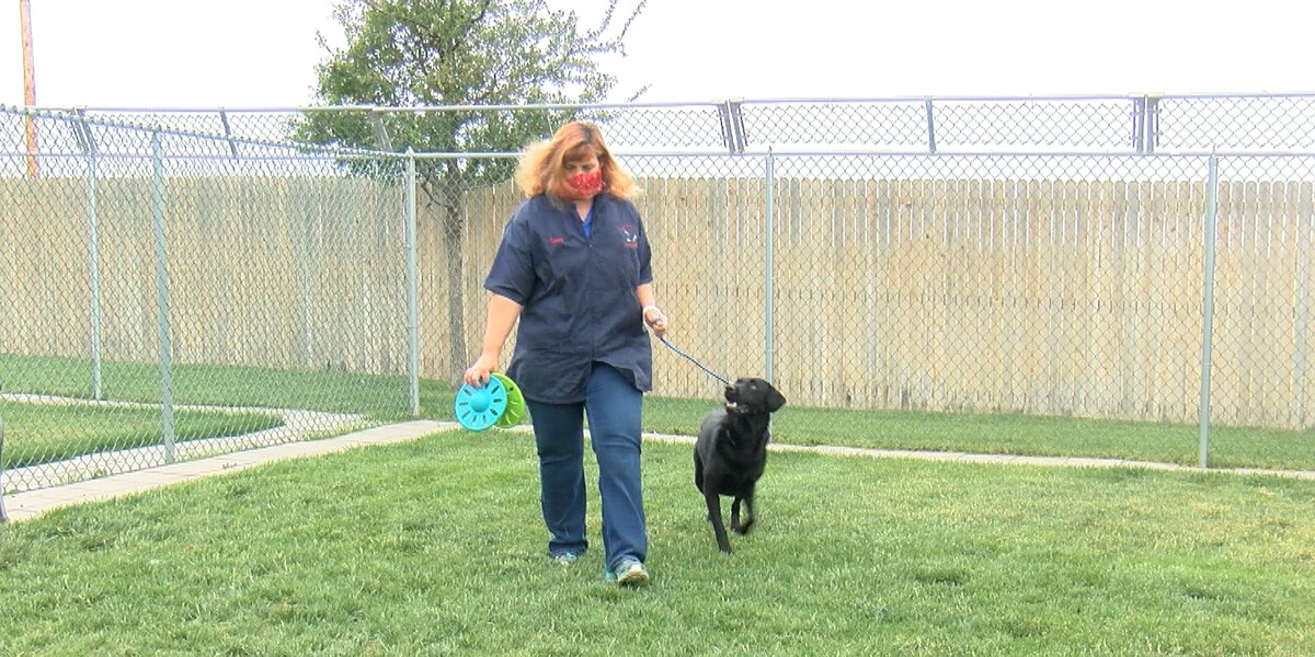 Pandemic decreases boarding business, pets to have difficulties adjusting once home alone