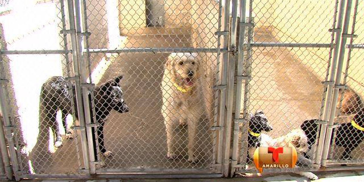Cambios para mascotas en Amarillo