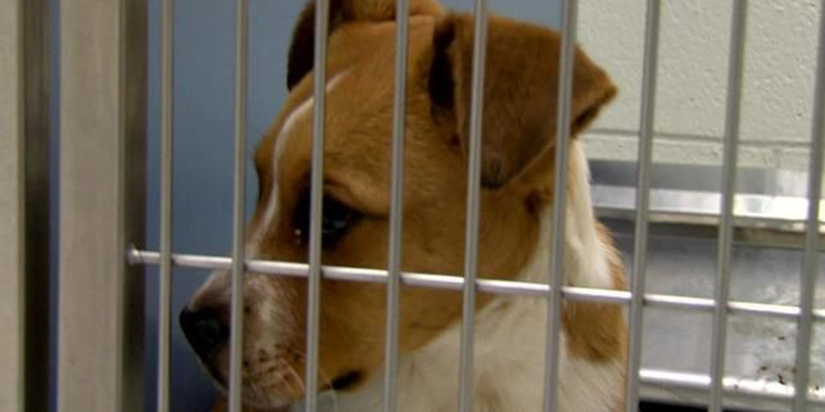 AAM&W holding meetings on proposed animal ordinance changes