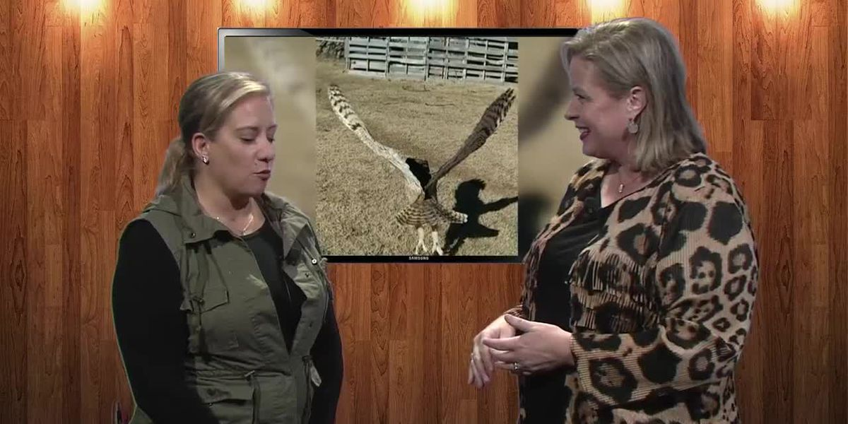 Interview - West Texas Wildlife and Rehabilitation