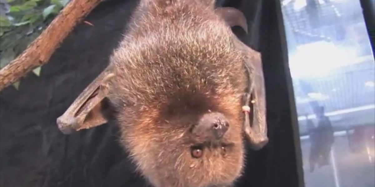 Bats headed to Panhandle quicker than expected