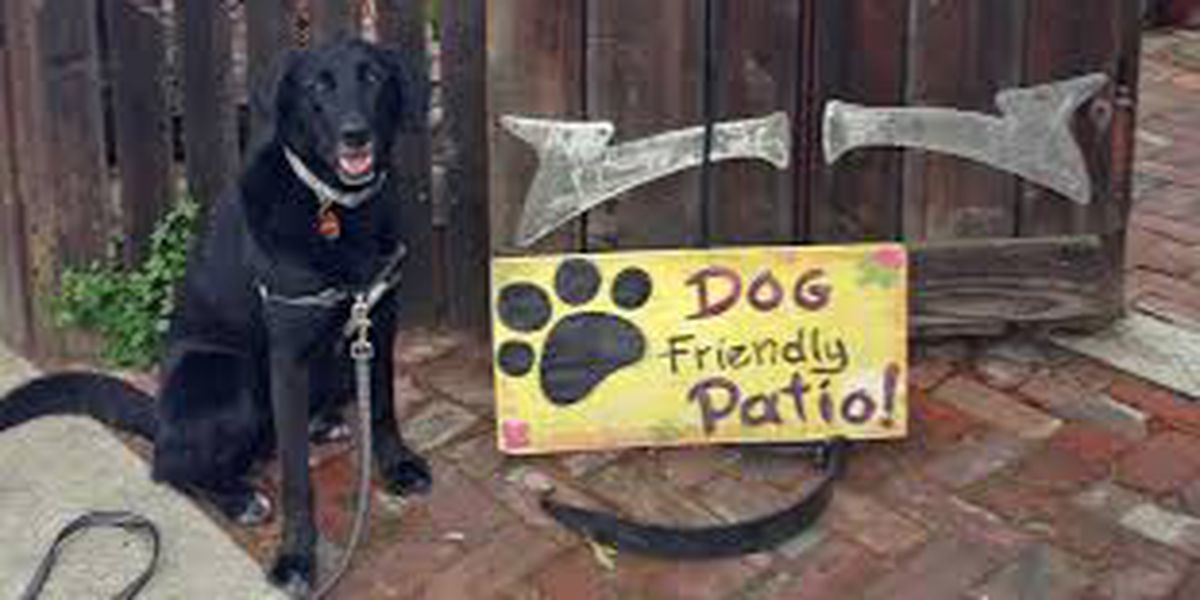 Dogs to be allowed on Texas restaurant patios due to State Bill 476