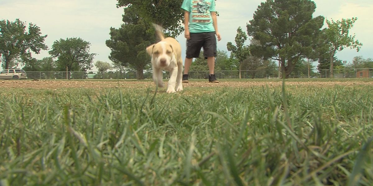 Dog flu returns to Texas
