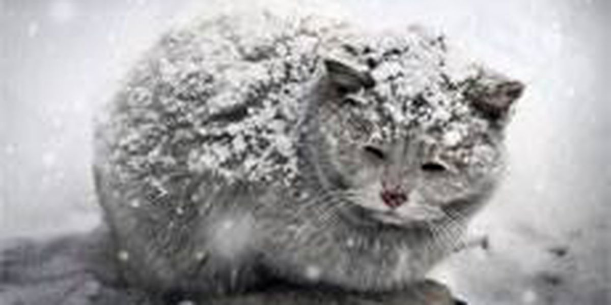 Pet owners reminded to make sure pets have proper shelter for winter weather