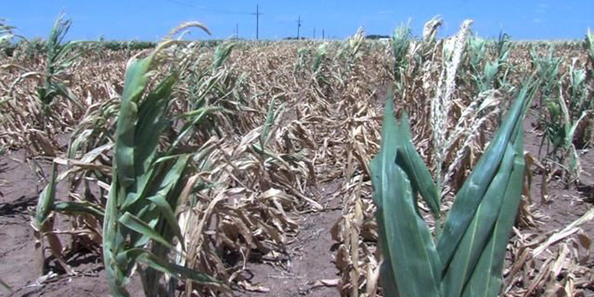 USDA offers relief to drought-stricken area farmers