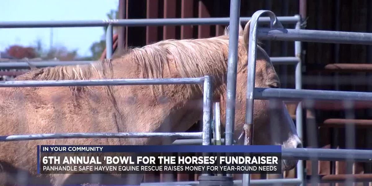 'Bowl for the Horses' event raises money for local horse rescue