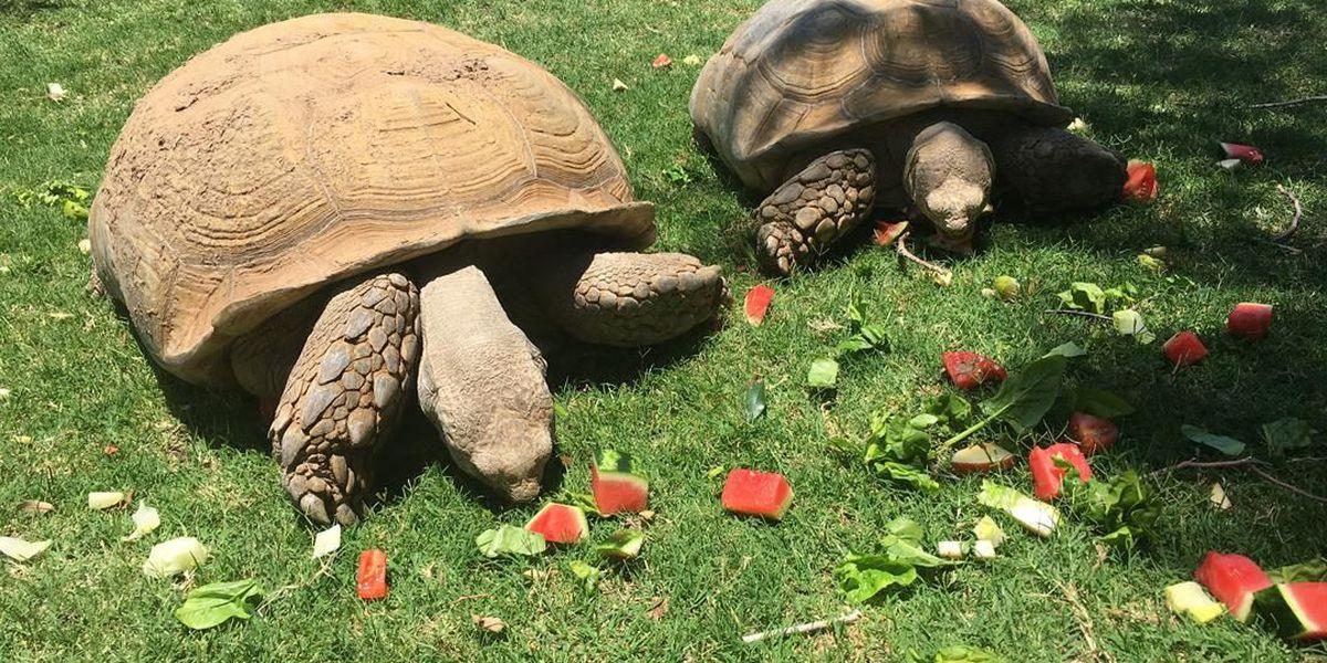 Amarillo zoo camps underway