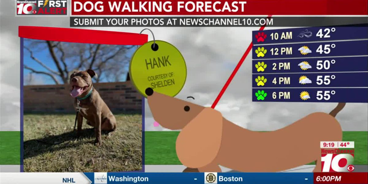 KFDA 2ND CUP: Submit your dog for our new Dog Walking Forecast