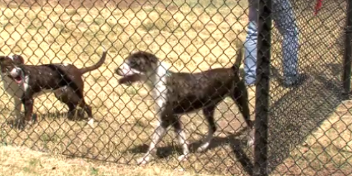 Starlight Ranch offers new kind of dog park experience