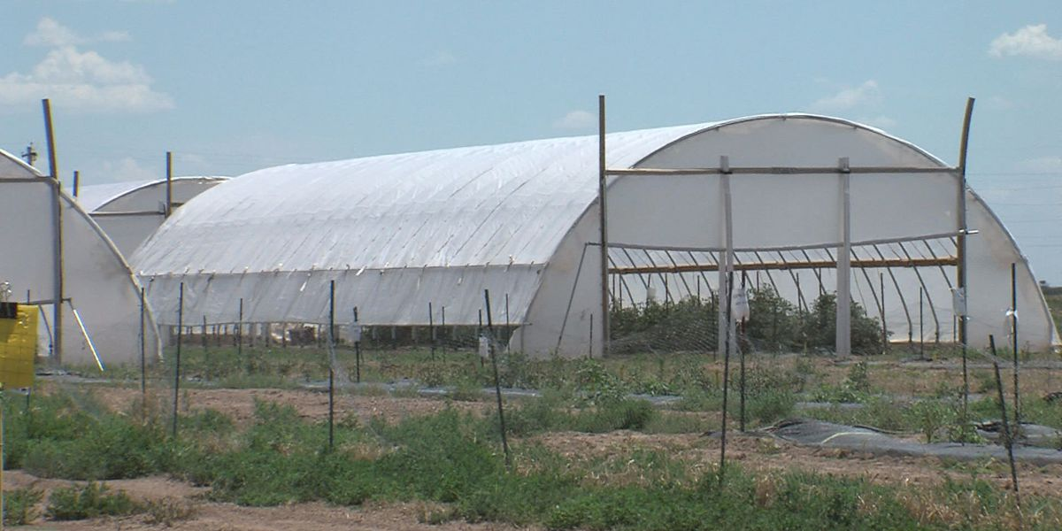 High tunnels show great promise for Panhandle farmers