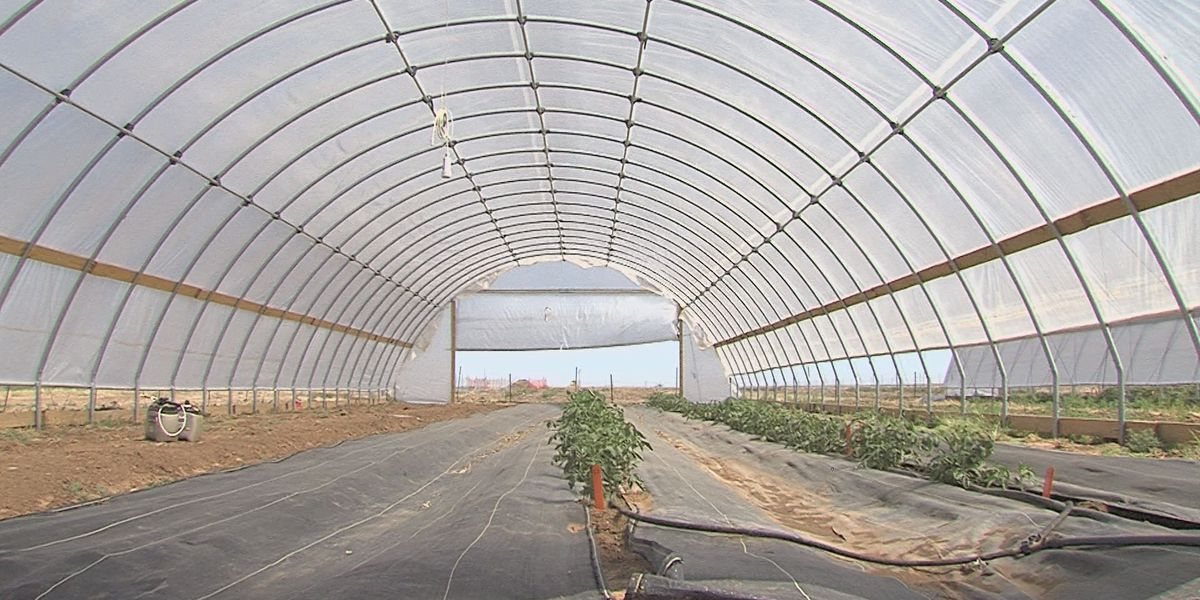 Researchers introduce high tunnels to Amarillo farms