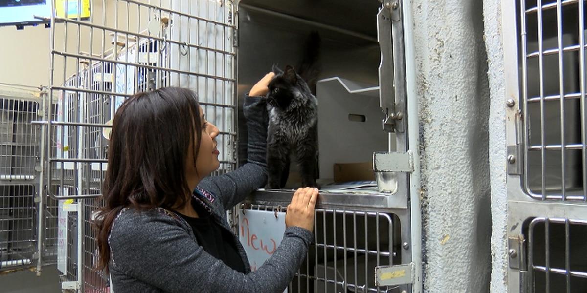 Amarillo's animal shelter hoping to expand reach under new volunteer program coordinator