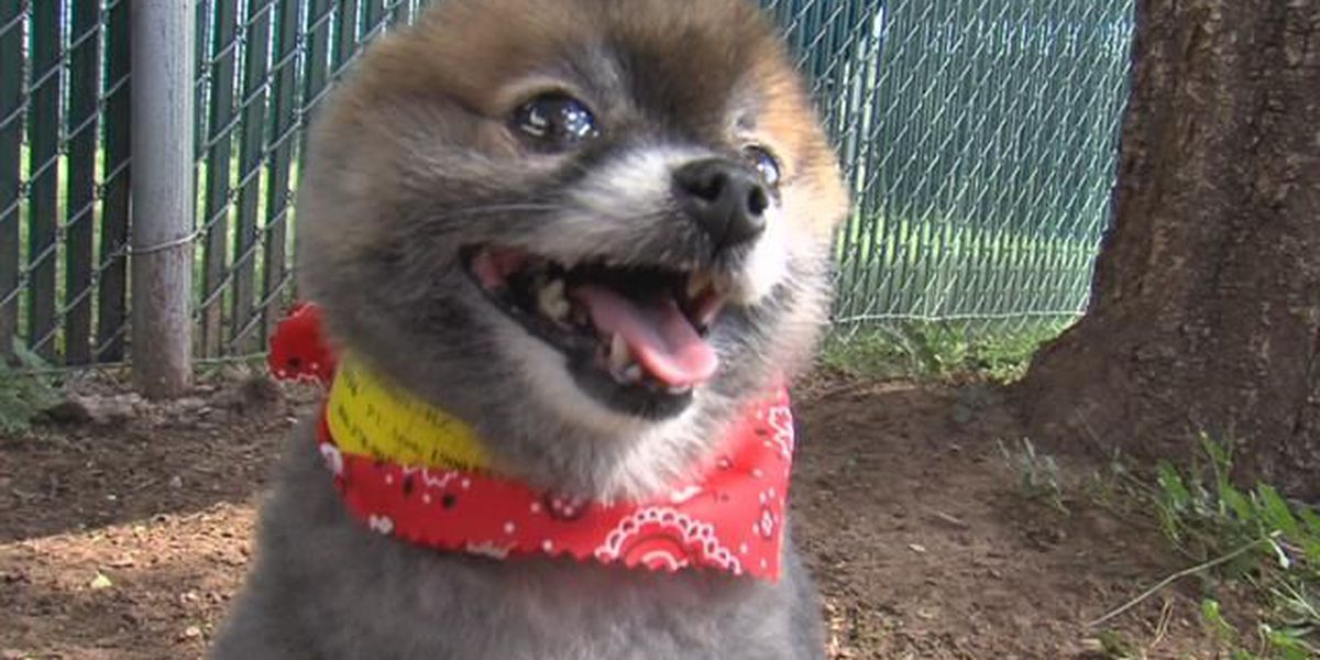 Dog to reunite with owner after years apart