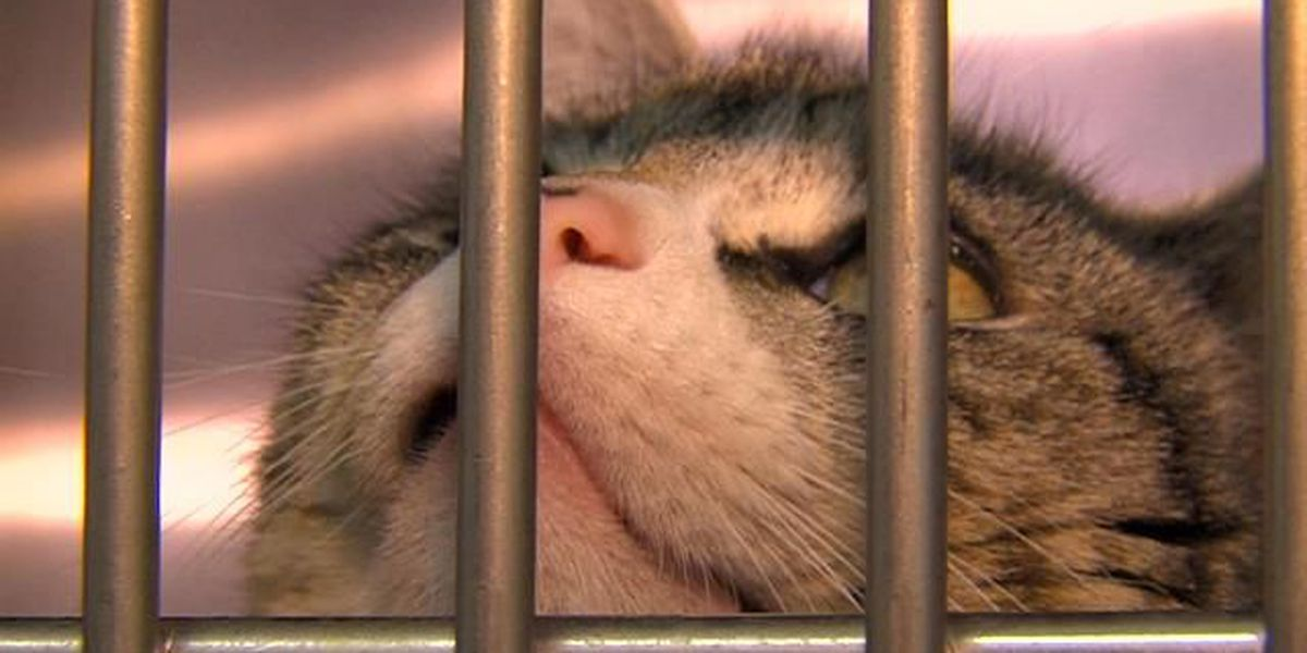 Cats need to be Corralled?